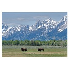 Teton Buffalo Wall Art