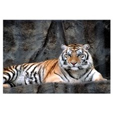 Resting Tiger Wall Art