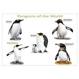 Penguins of the World Wall Art