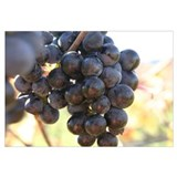 # 22 Screensaver winter grapes framed photograph