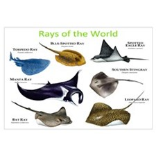 Rays of the World Wall Art