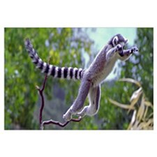 Leaping Lemur Wall Art