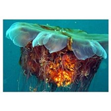 Jellyfish - Underwater Photo Wall Art