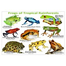 Frogs of the Tropical Rainforests Wall Art