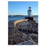 Bug Light 11x14 Poster