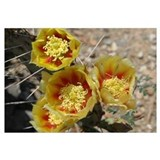 Yellow Prickly Pears Wall Art