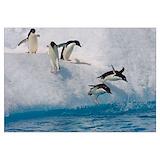 Penguin Wall Art