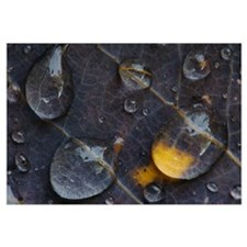 Water drops on a leaf, Goldenstedt, Lower Saxony,