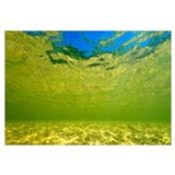 Underwater view of the Novo River, Jalapao, Brazil