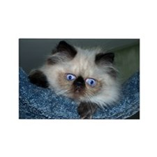 Blue-Eyed Himalayan Kitten Magnets (Set of 10)