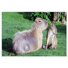 Capybara Mom and Son Wall Art