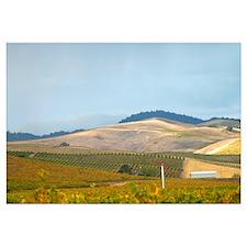 Framed Prints - Napa & Sonoma Wine Country
