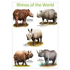 Rhinos of the World Wall Art