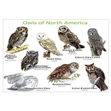 Owls of North America Wall Art
