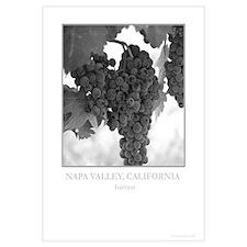 Napa Valley Grapes, Black + White Wall Arts