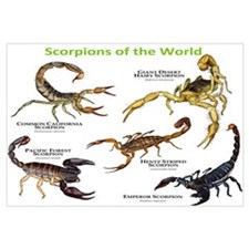 Scorpions of the World Wall Art