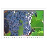 ripe grapes napa valley wine country posters