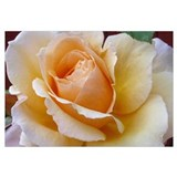 Orange Pastel Rose Wall Art