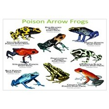 Poison Dart Frogs of the Amazon Wall Art