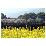 Napa Valley Mustard Wall Art