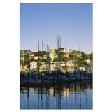 Sailboats in the sea, Tiburon, California