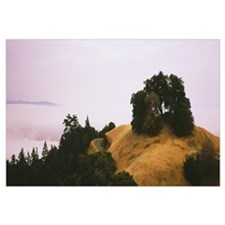 Trees on a hill, Mt Tamalpais, California