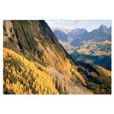 Colorado, San Juan Mountains, View of trees in aut