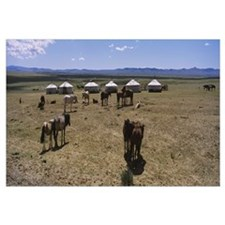 Group of horses and yurts in a field, Independent
