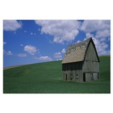 Barn in a wheat field, Black Diamond, Washington S