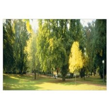 Trees in a park, Wiesbaden, Rhine River, Germany