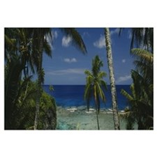 Palm trees on the beach, Niue Island
