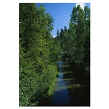Trees along a river, Blue River, White Mountains,