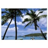 US Virgin Islands, St. John, Cruz Bay, Palm trees