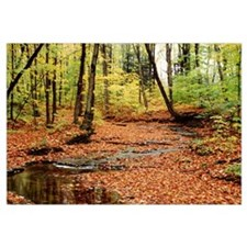 New York State, Erie County, Emery Park, Stream of