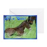 Colt Foal Announcement Cards (Pk of 10)