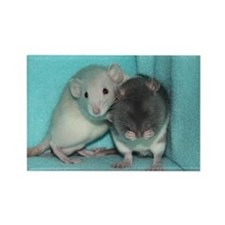 RC's Its Alright Rats Rectangle Magnet