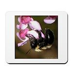 Bee dangling from Judas-tree flowers Mousepad