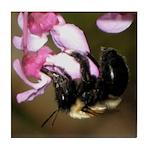 Bee dangling from Judas-tree flowers Tile Coaster