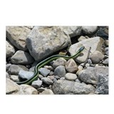 Garter Snake Postcards (Package of 8)