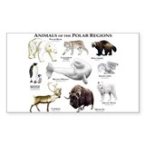 Animals of the Polar Regions Decal