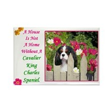 Cute Cavalier king charles spaniel dog breed Rectangle Magnet