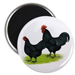 """Australorp Chickens 2.25"""" Magnet (10 pack)"""