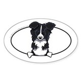 Border Collie Peeking Bumper Decal