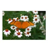 Butterfly Photography Postcards (8 pack)