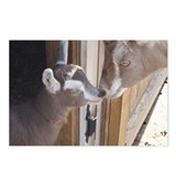 Dairy Goat Postcards (Package of 8)