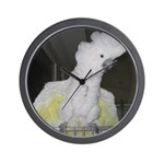 Umbrella Cockatoo 2 Wall Clock
