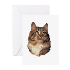 Maine Coon face Greeting Cards (Pk of 20)