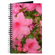 Pink Azalea Picture Journal