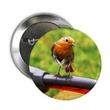 "Robin 2.25"" Button (10 pack)"