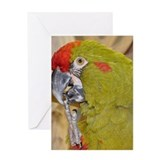 Red-fronted Macaw Greeting Card